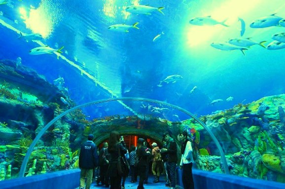 Aquarium of Western Australia Tempat menarik di Perth Australia
