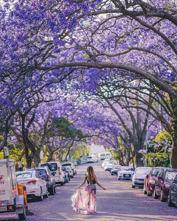 Đi tìm' mùa xuân tại Nam bán cầu giữa ngày thu