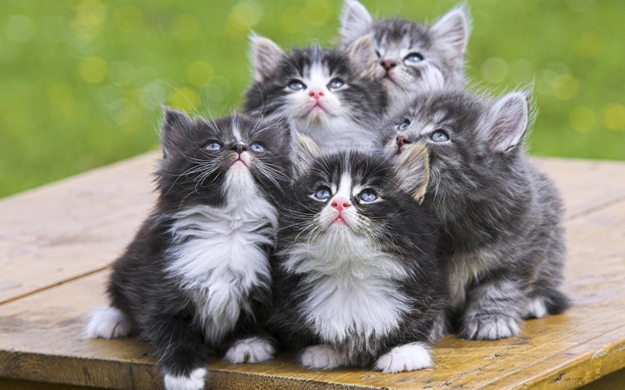Activating Thoughts Cute Cats And Kittens