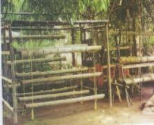 Gambar Kolom Horizontal bambu yang telah disusun dan siap untuk ditanami