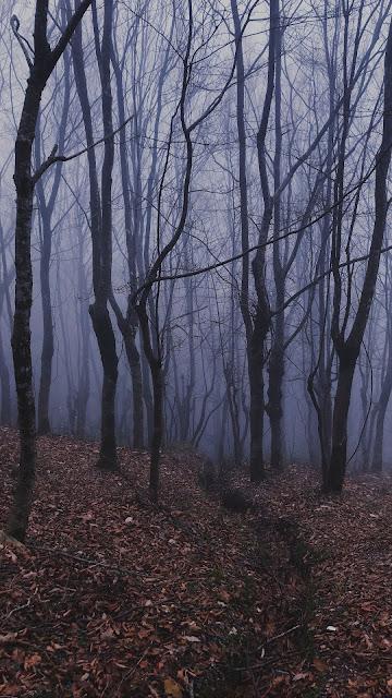 Trees, forest, fog, fog, dry leaves