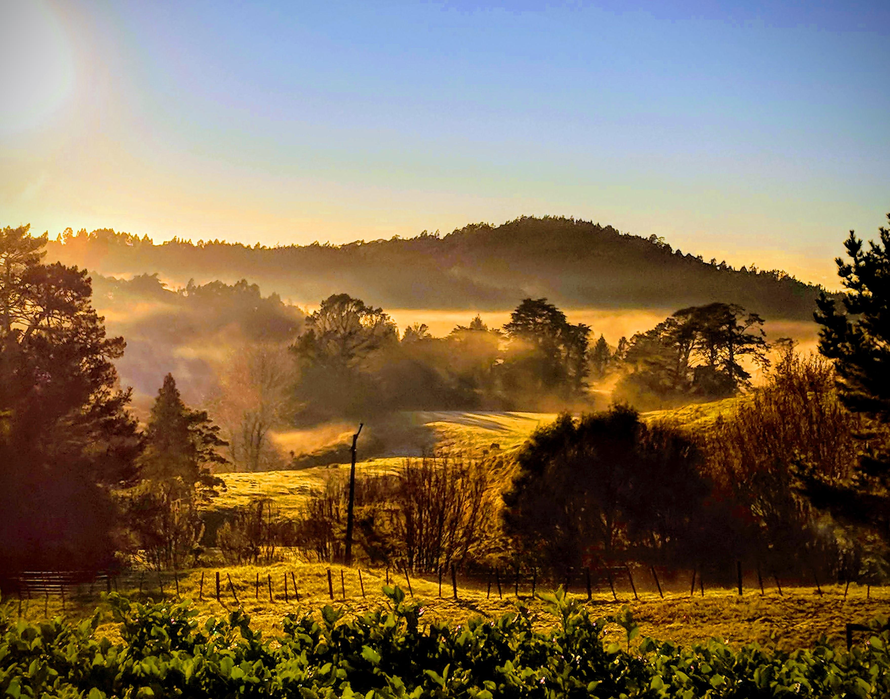 Misty morning sunrise over New Zealand countryside
