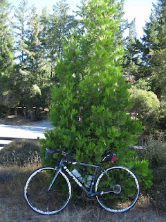 Bike parked against a tree, near Santa Cruz, California