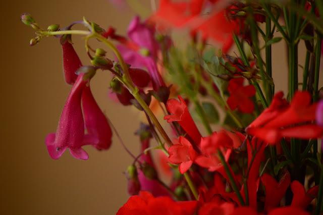 desert garden, small sunny garden, amy myers, monday vase meme, penstemon pseudospectabilis