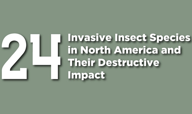 24 Invasive Insect Species in North America and Their Destructive Impact