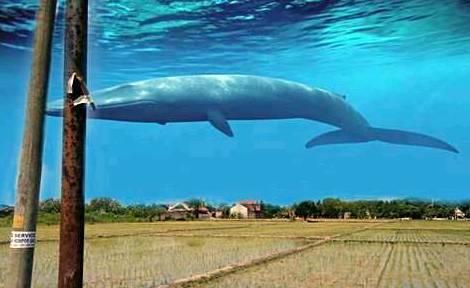 Tutorial Edit Foto Ikan Hiu Melayang di Atas Langit