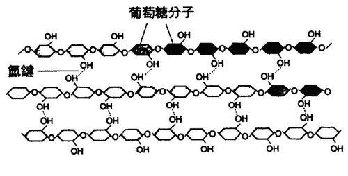 江芳銘的中學生物講堂: 為什麼由死細胞組成的木質部還能運輸水分?