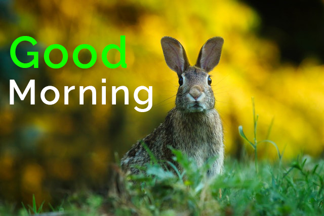 50+ Cute Good Morning Images, Pictures, Photos, Quotes Collection Free Download