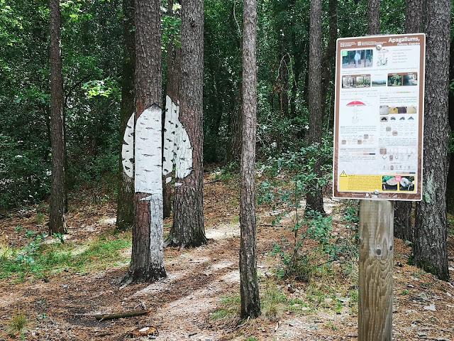 apagallums bosc pintat poblet
