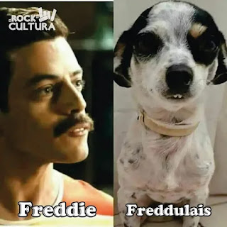 Freddy Mercury vs Freddulais