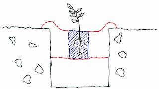 Βελανιδιά: σπορά φύτεμα