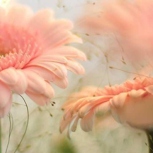 Zoom dise o y fotografia 55 bellas imagenes de flores - Fotos flores bellas ...