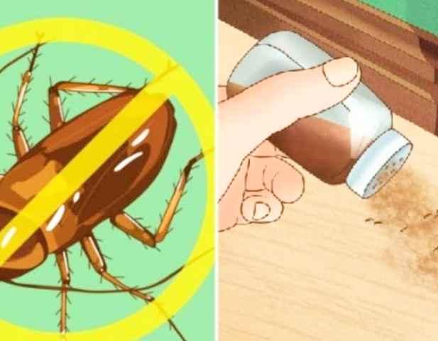 طرق التخلص من الحشرات المنزلية
