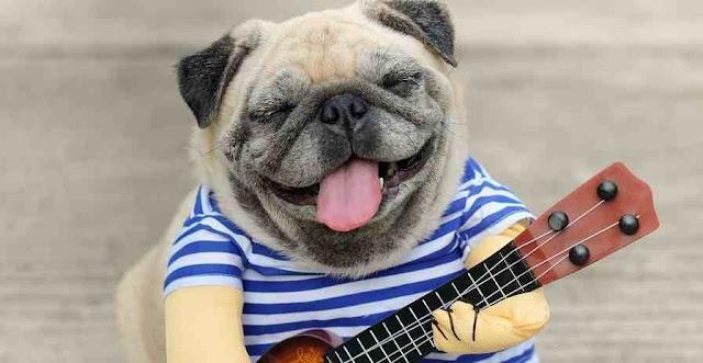 pandangan yang salah terhadap gitaris peter de vries guitar
