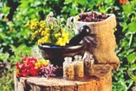 Cara menggunakan tanaman obat herbal