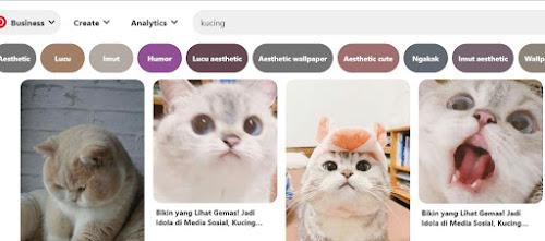 kucing – Kompirasi.com