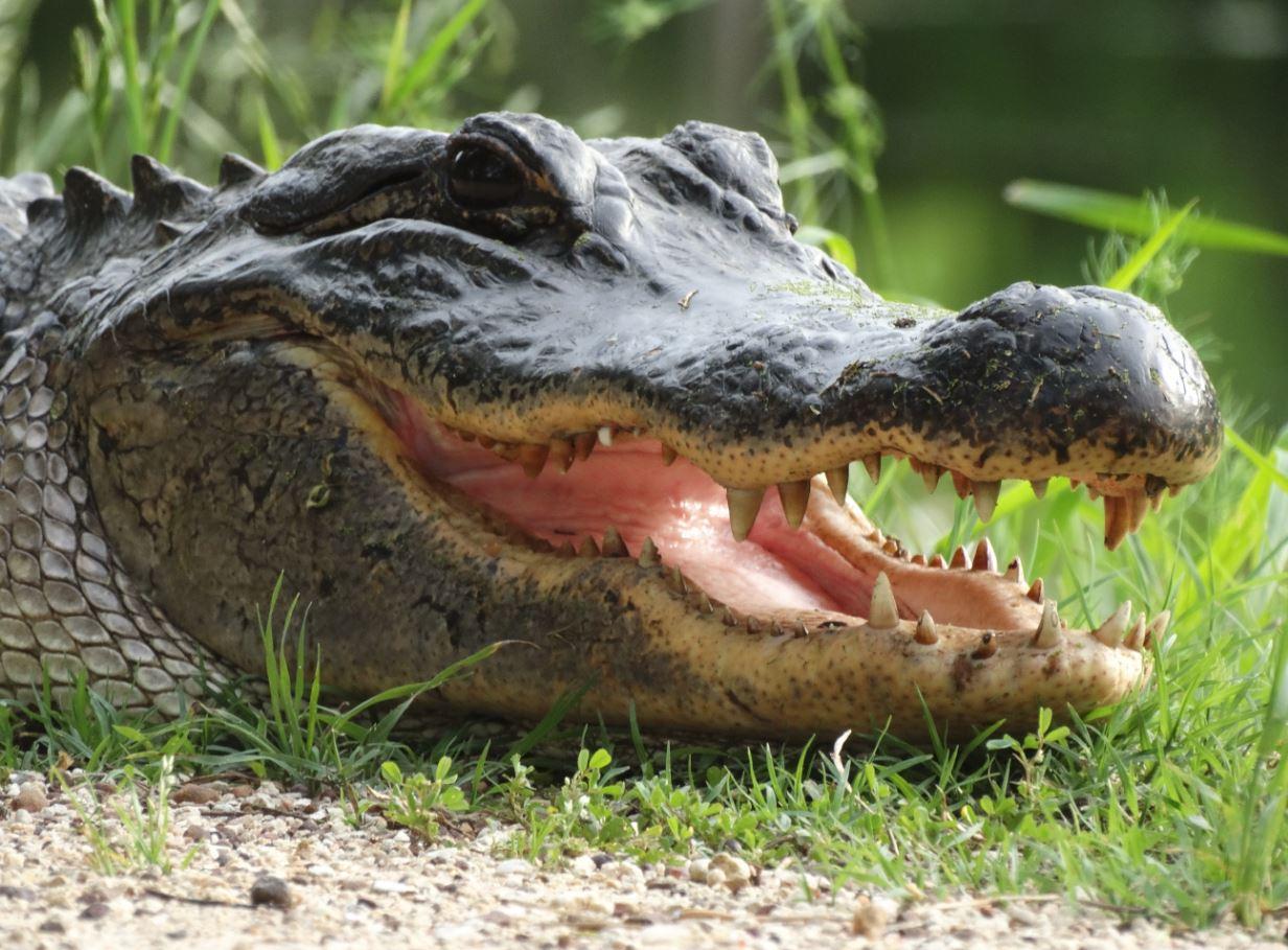 Embark on a remarkable wildlife safari in Texas at Natural Bridge Wildlife Ranch, set on acres of rolling hills and creek beds just north of San circulatordk.cfon: Natural Bridge Caverns Rd, San Antonio, , TX.