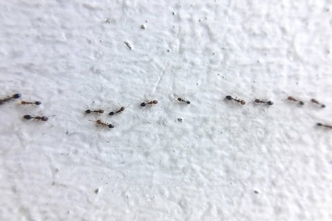 Signs That An Ant Infestation in Your Home Has Gotten Out of Control