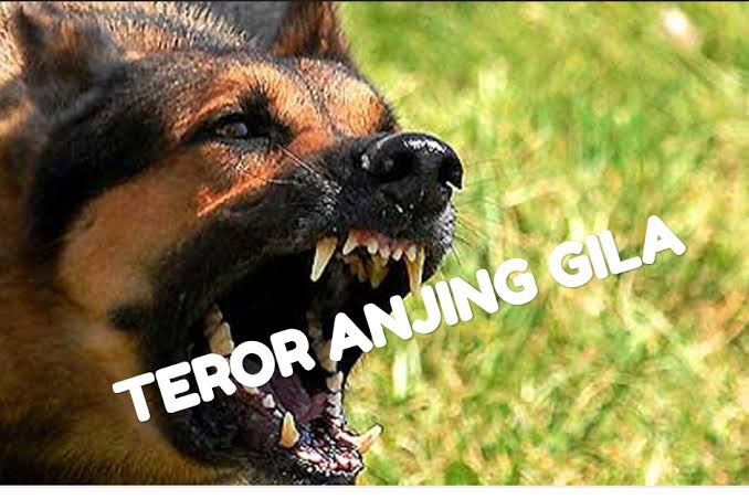 Teror Anjing 'Gila' Resahkan  Warga Inhil, Riau