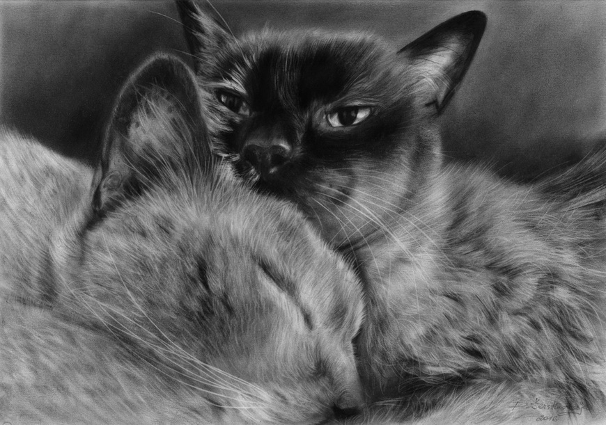 06-Burmese-Cats-Danguole-Serstinskaja-Paintings-of-Cats-that-look-like-Photographs