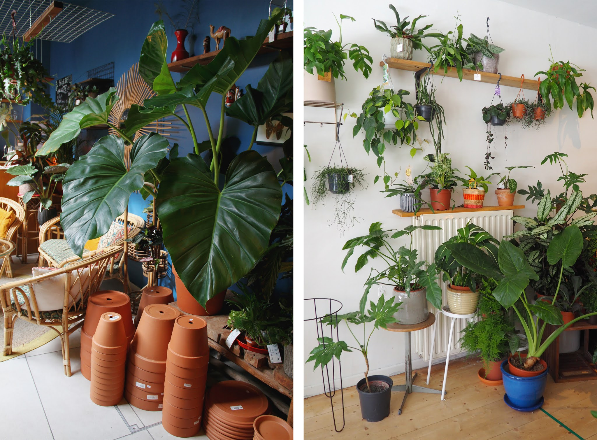 4 plant shops in Ghent