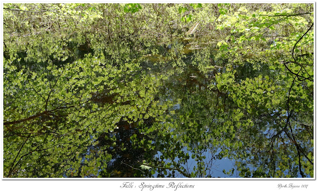 Fells: Springtime Reflections