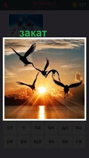 в свете заката летают птицы, видны только их силуэты