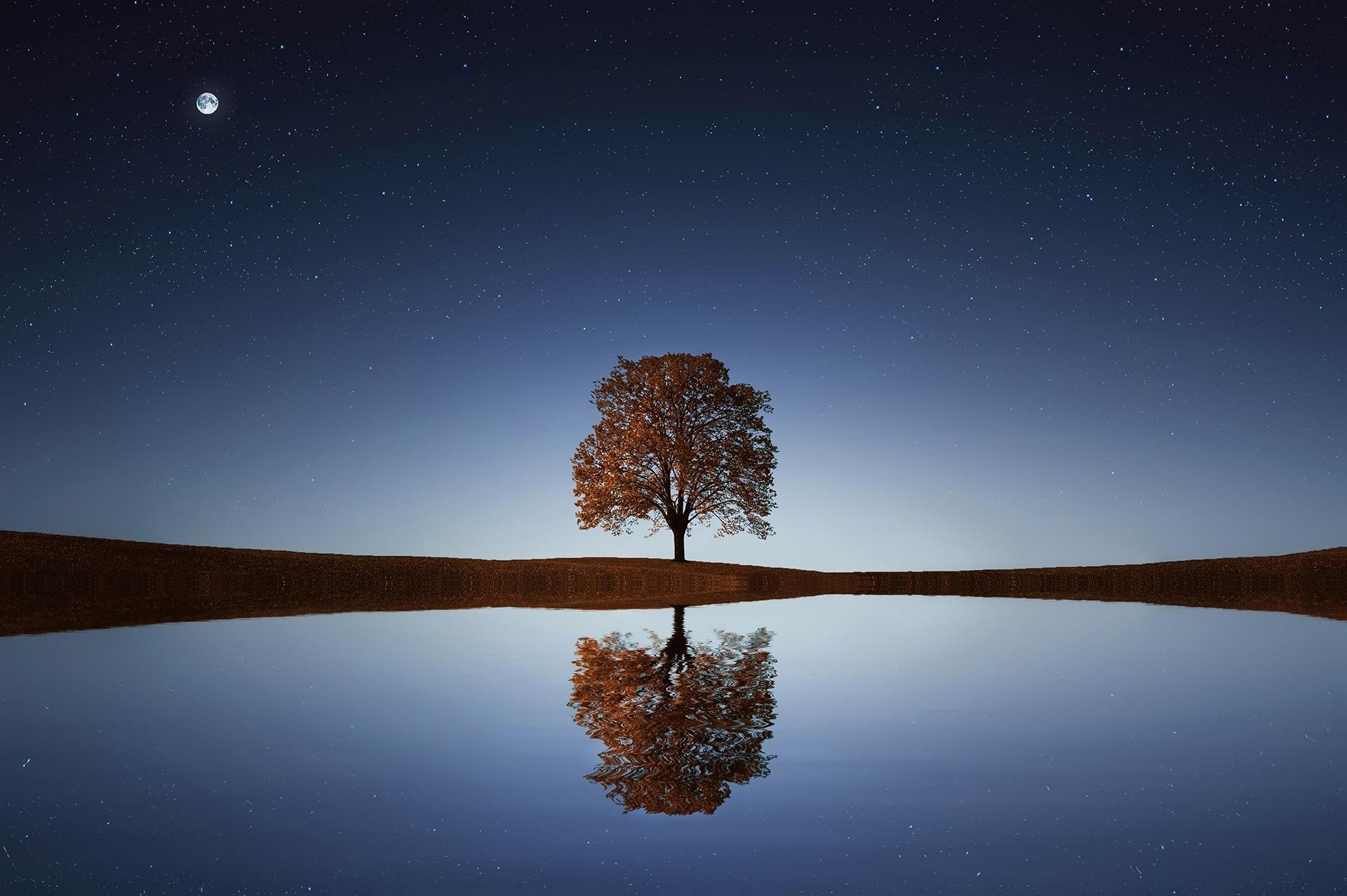 manusia dan pohon