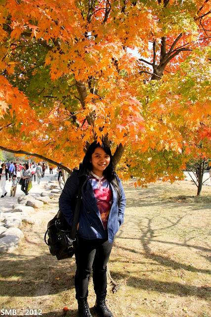 Seoraksan autumn korea