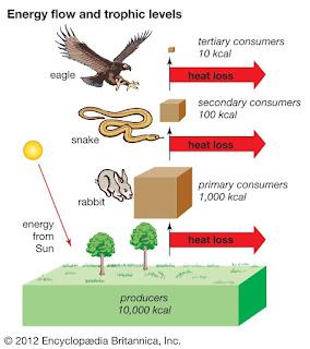 Urutan perpindahan energi