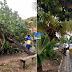 Árvore caiu em cima de carro em Cajupiranga