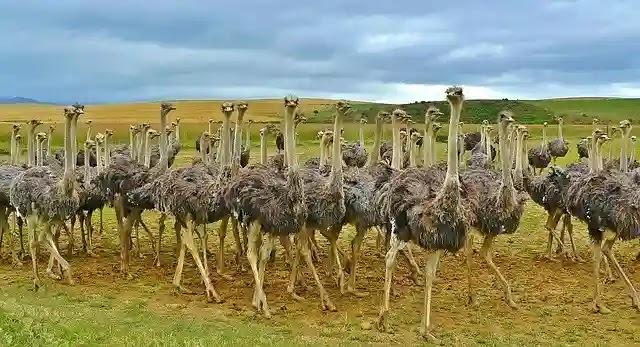 السياحة في جنوب افريقيا  10 اماكن تستحق زيارتك 2020