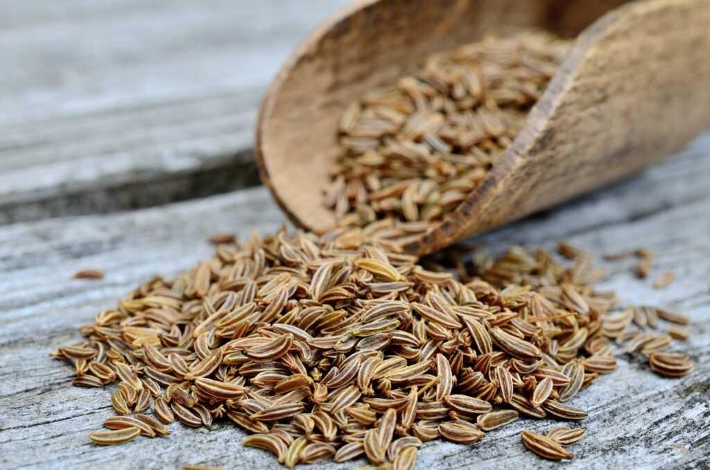 14 Benefícios Das Sementes de Alcaravia à Saúde