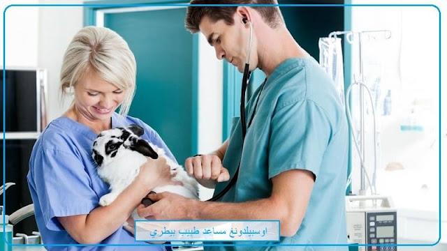 اوسبيلدونغ Tiermedizinischer Fachangestellter في المانيا راتب اوسبيلدونغ دكتور البيطري دكتور الحيوانات اوسبيلدونغ في مجال الحيوانات Ausbildung Tierarzt