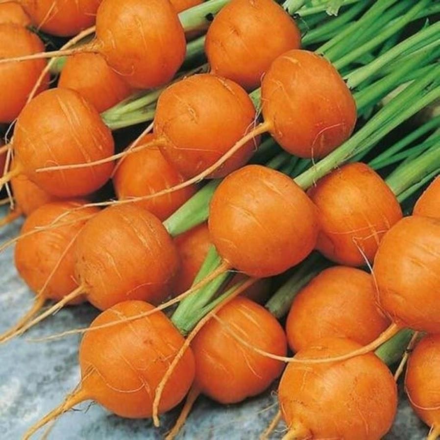 Benih Bibit Biji Wortel Parisian Carrot Bibit Import Aceh