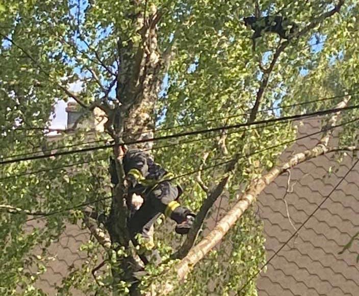 Ugunsdzēsējs uzkāpis kokā, lai palīdzētu nocelt kaķi