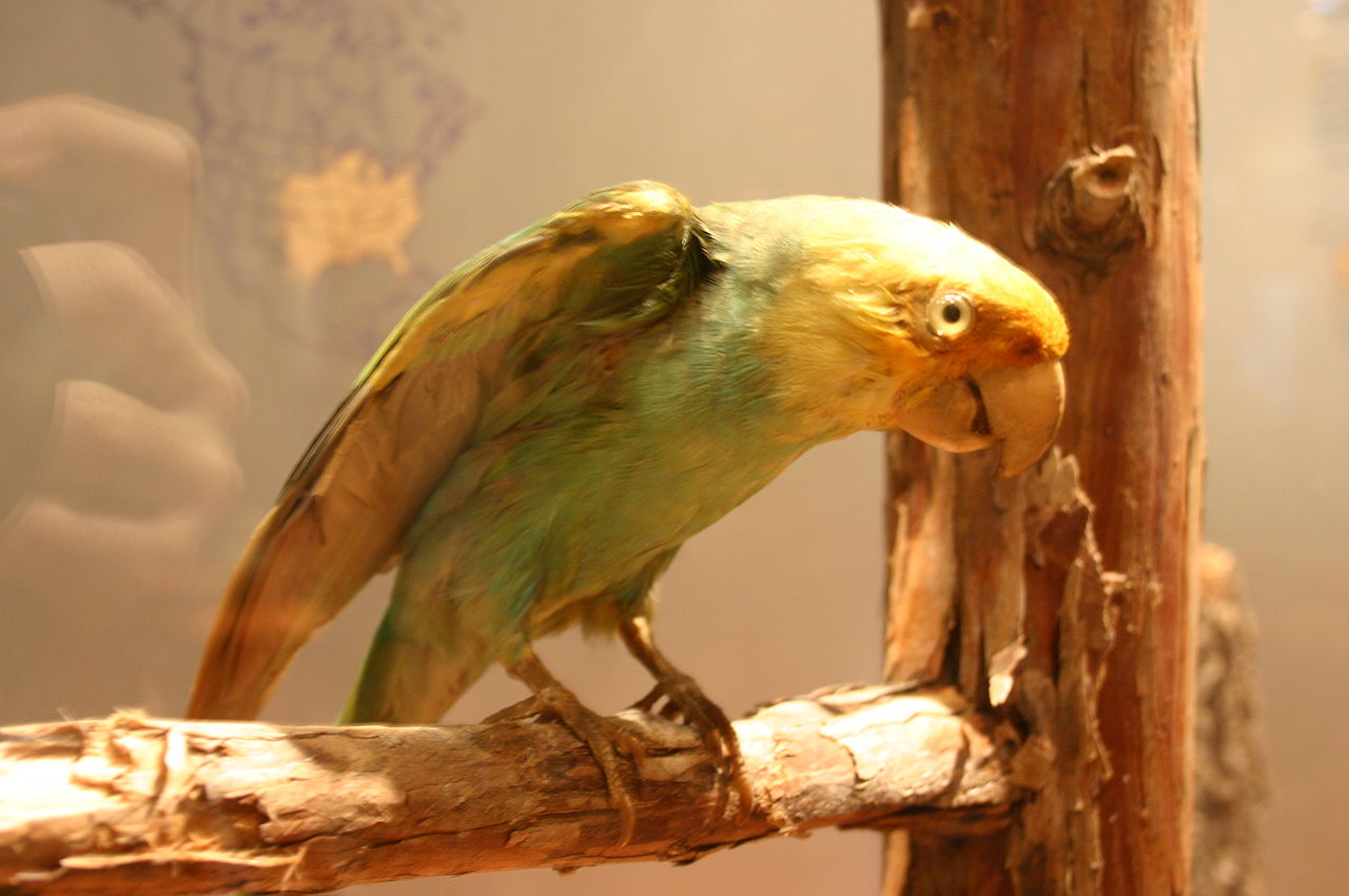 दुनिया के कुछ विलुप्त पक्षी