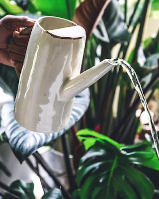 Jaką konewkę wybrać? Najpiękniejsze konewki do podlewania roślin