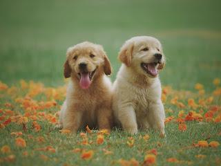 Deux chiens heureux