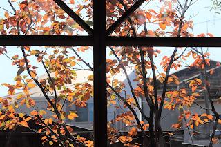 コンサバトリーの窓から臨むジューンベリーのオレンジ色の葉