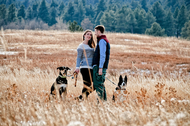 an amazing photo of a couple for the engagement session in Boulder as their dogs look towards the camera