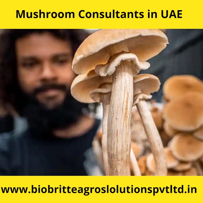 Mushroom consultants in Dubai | Mushroom consultants in UAE | Mushroom farm in Dubai