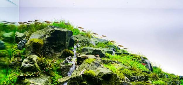 Contoh dan Referensi Desain Aquascape Iwagumi Terbaik
