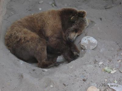 zoo-barcelona-urs