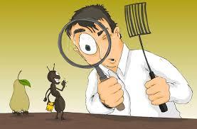 مكافحة النمل الابيض ينبع