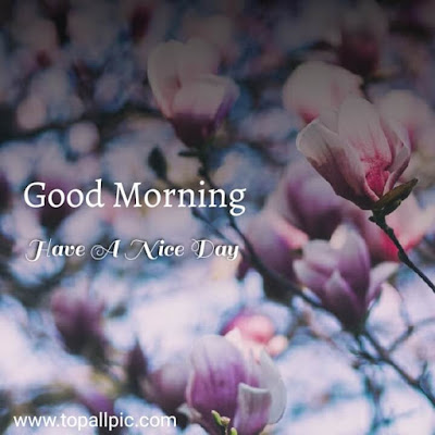 flower images for good morning hd download