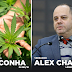 Alex Chaves é contra a aprovação PL399/15 que regulamenta o plantio de maconha no Brasil