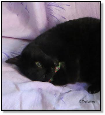 mit Baldrian gefülltes Kissen für die Katze