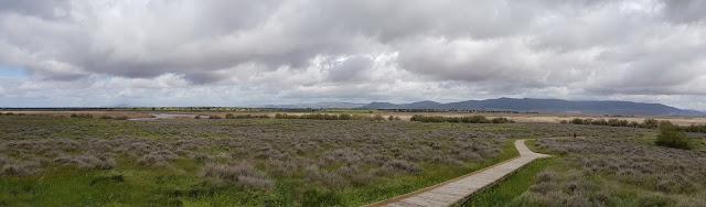 Isla del Pan -  Tablas de Daimiel