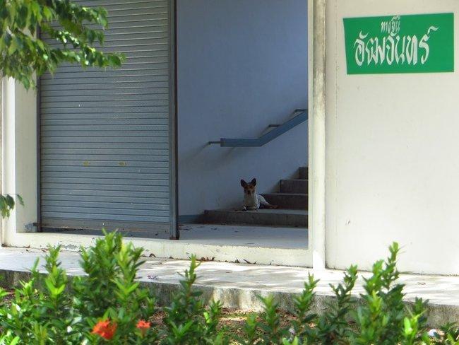 Собака смотрет
